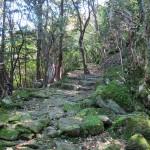 大洞山の東海自然歩道1